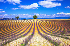 France. Provence  - lavander fields Stock Photo