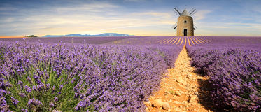 France - Provence. Lavenders in South of France - Provence Royalty Free Stock Images