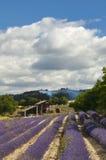 France - Provence - Sault. Lavender fields and lavender distillery Stock Images