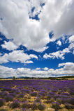 France - Provence - Sault Stock Photos