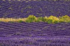 France - Provence - Sault Stock Photography