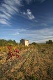 france provence vingårdar Arkivbilder