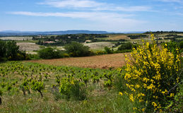 France's Châteauneuf-du-Pape Royalty Free Stock Images