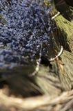 france sault Provence Zdjęcie Stock