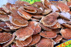 France, scallops at the market of Le Touquet Paris Plage Stock Images