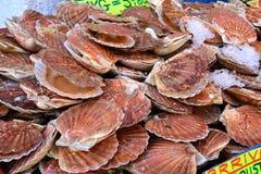 France, scallops at the market of Le Touquet Paris Plage Stock Images