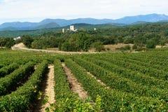 france sydliga vingårdar Arkivfoto