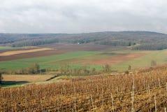 france szampańscy winnicy Zdjęcie Stock