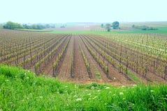 France, um vinhedo na mola Imagens de Stock