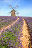 France - Valensole - Lavandes Royalty Free Stock Photography