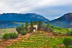 France, view of vineyards Royalty Free Stock Photography