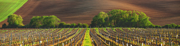 France vineyard Stock Photo