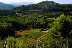 A France Vineyard in the hills Royalty Free Stock Photos
