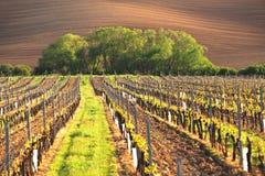 France vineyard at summer Royalty Free Stock Image