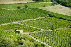 france vingård Arkivfoton