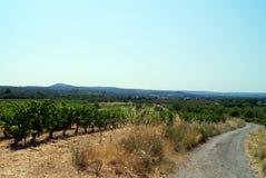 france vingård Royaltyfri Bild