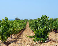 france vingård Royaltyfri Foto