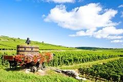 france vingårdar Royaltyfri Fotografi