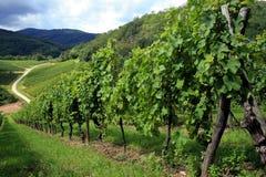 France winnica alsace Obrazy Stock