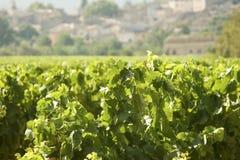 france winnica Provence Zdjęcie Stock