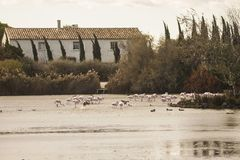 Frances, Camargue, Saintes-Maries-de-la-Mer photos libres de droits