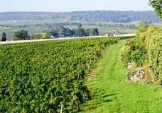 Frances de Beaune Cote de Beaune Bourgogne de vignoble de pinot noir Images libres de droits