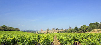 Frances de vignoble. Carcassonne. Photographie stock