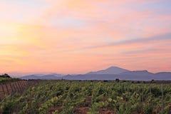 Frances - les Vignes de Sainte Cécile Photo libre de droits