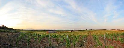 Frances - les Vignes de Sainte Cécile Photographie stock