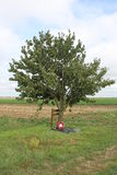 Frances solitaires de champ de bataille de toilettes de l'arbre WW1 Photographie stock