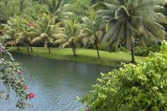 Francia, Martinica, jardín Imagen de archivo