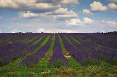 Francia meridional, campo de la lavanda en Provence Foto de archivo