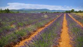 Francia meridional, campo de la lavanda en Provence Fotos de archivo libres de regalías