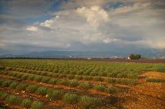 Francia meridional, igualando en Provence, lavanda coloca el af que se inclina Foto de archivo libre de regalías