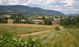 Francia meridional, paisaje rural: campos de la lavanda Fotos de archivo libres de regalías