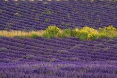 Francia - Provence - Sault fotografía de archivo