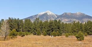 francisco koni para osiąga szczyt San Obrazy Royalty Free