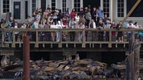 39 Francisco lwów mola San morze zdjęcie wideo