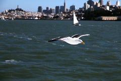 francisco san seagull Royaltyfria Foton