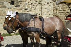 Francja. Carcassonne. Zdjęcia Royalty Free