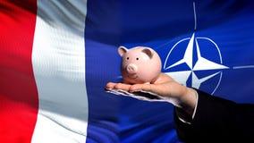 Francja inwestycja w NATO-WSKI, biznesmen ręki mienia piggybank na chorągwianym tle obrazy stock
