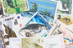 Francobolli con un tema dell'uccello Fotografia Stock