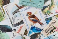 Francobolli con un tema dell'uccello Immagini Stock Libere da Diritti