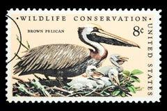 Francobollo dell'uccello del pellicano di Brown Fotografia Stock