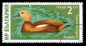 Francobollo di serie del ` degli uccelli acquatici del ` della Bulgaria, 1976 fotografie stock libere da diritti
