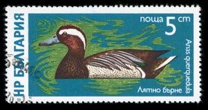Francobollo di serie del ` degli uccelli acquatici del ` della Bulgaria, 1976 Fotografia Stock Libera da Diritti