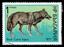 Francobollo di serie del ` della fauna selvatica del ` della Bulgaria, 1977 fotografie stock