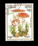 Francobollo: Il Laos 1985, AMANITA MUSCARIA Immagini Stock Libere da Diritti