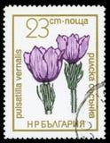 Francobollo protetto di serie del ` dei fiori del ` della Bulgaria, 1972 Fotografie Stock Libere da Diritti