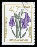 Francobollo protetto di serie del ` dei fiori del ` della Bulgaria, 1972 fotografie stock